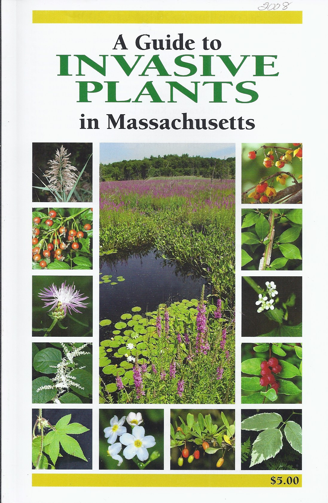Image for A Guide to Invasive Plants in Massachusetts